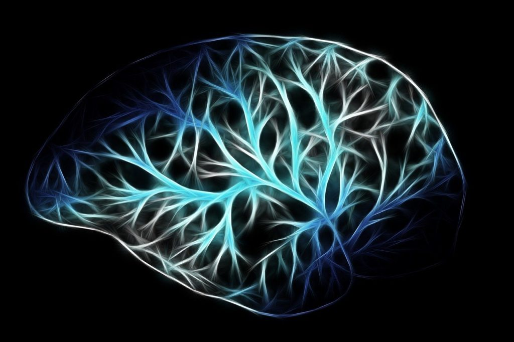 brain, biology, anatomy